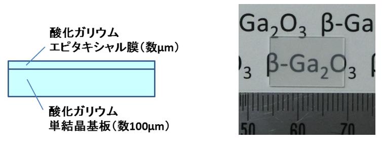 酸化ガリウムエピウエハの断面構造と写真